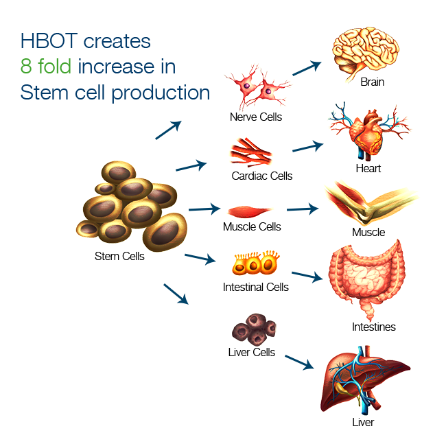 HBOT Creates a 8 fold Stem Cell Production
